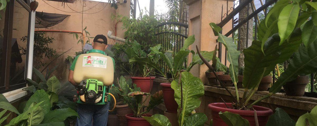 Anti-dengue Treatment!
