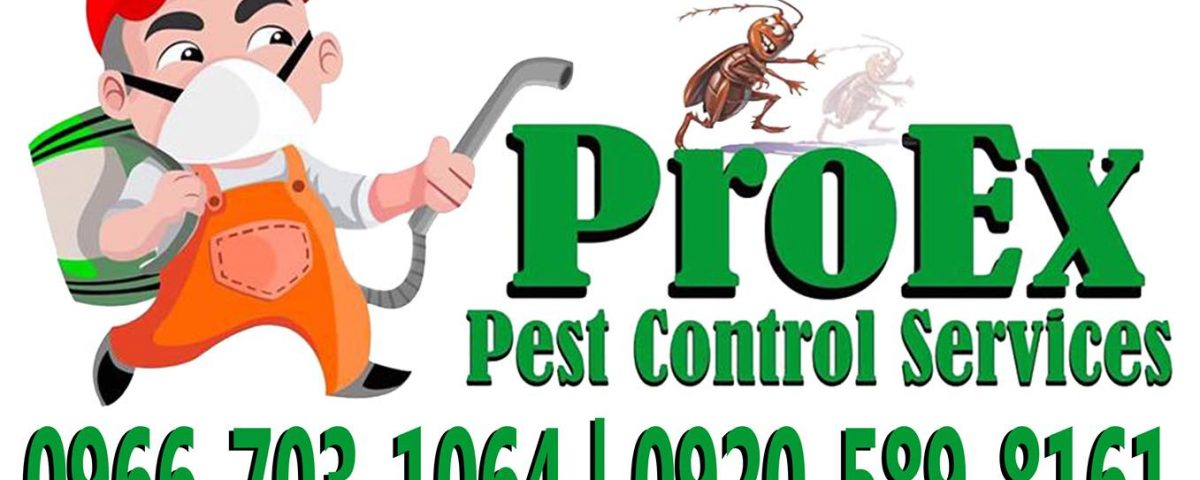 For your pest problem, contact us!