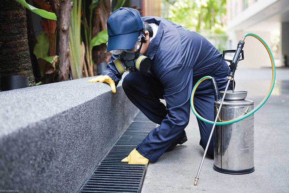 General Pest Control Services in Tagum