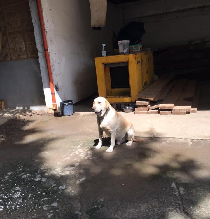 Fleas and Ticks treatment in the whole perimeter of a residential structure. Jus...