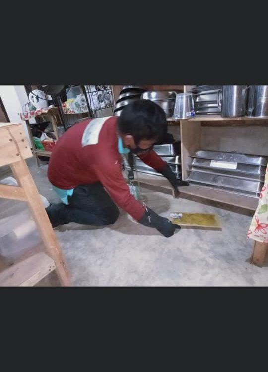 Installation of Rat Glue Boards!   #RatMiceControl