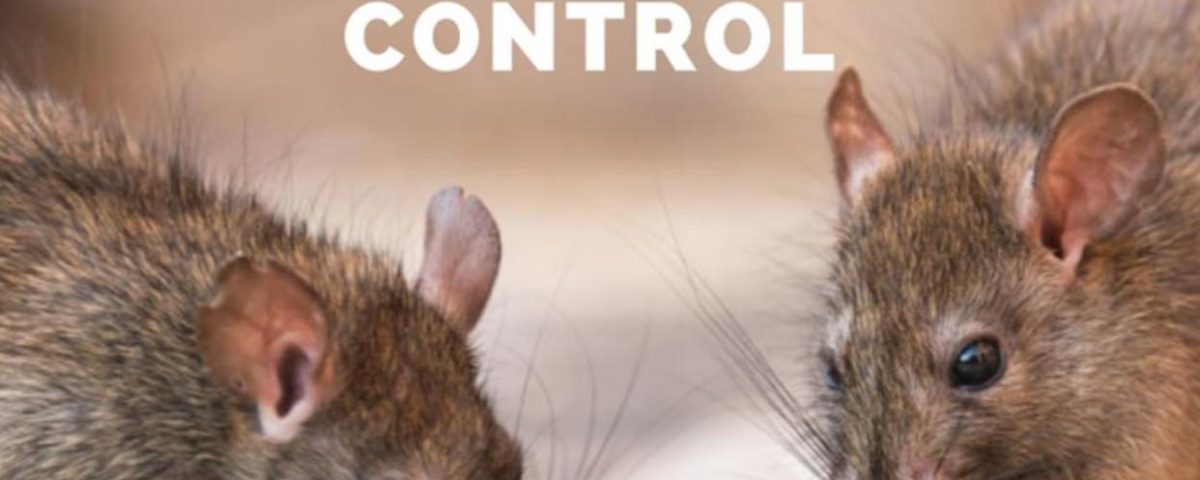Rat Problem? Call rat infestation control experts today! Call ProEx Pest Control...